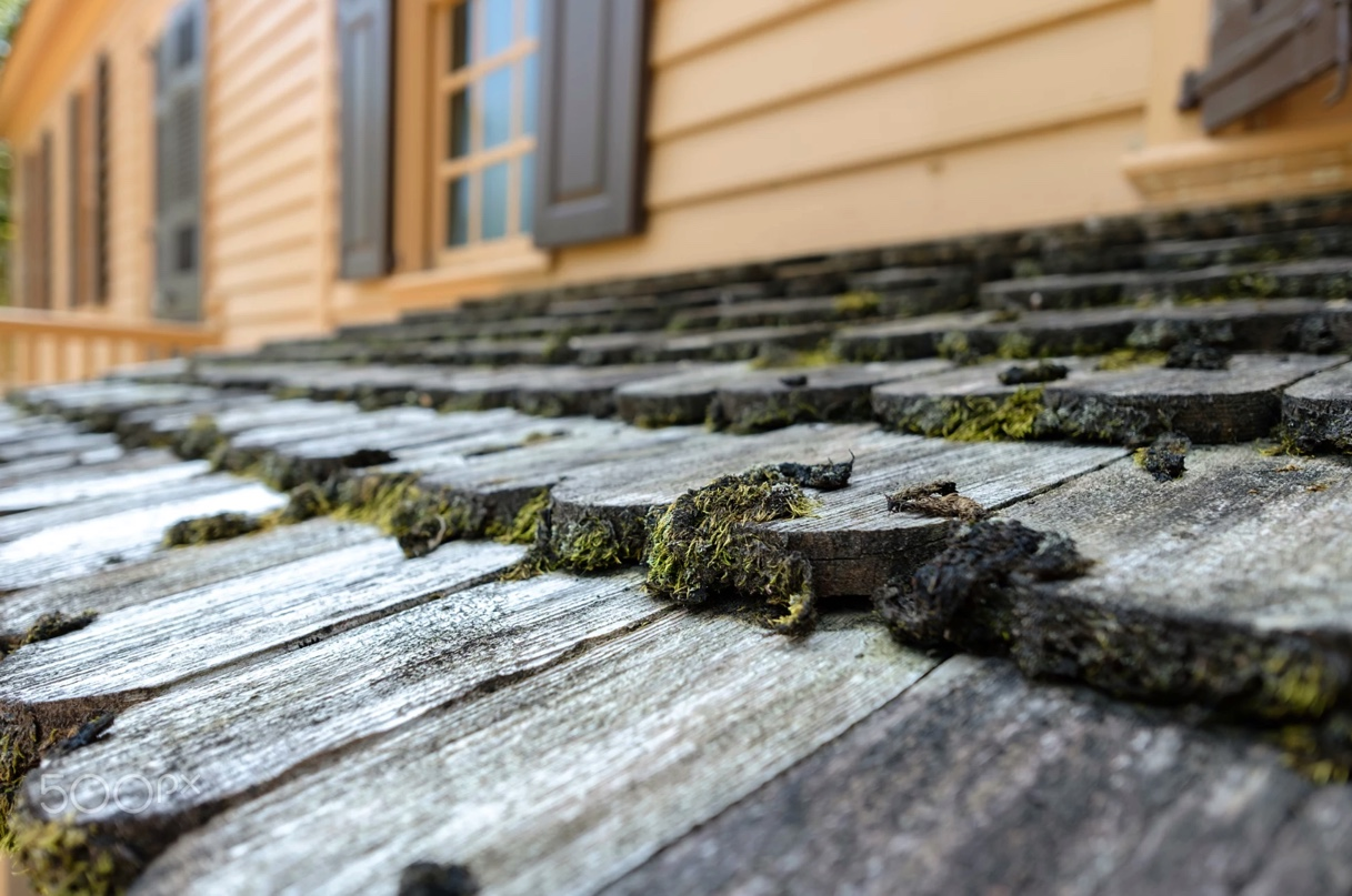 Close up of weathered wood roof shakes covered with patches of green and brown moss.